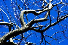 Free Tree And Sky Royalty Free Stock Photography - 690157