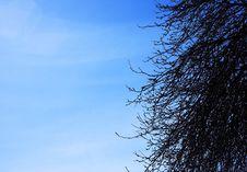 Free Tree And Sky Stock Photo - 690170