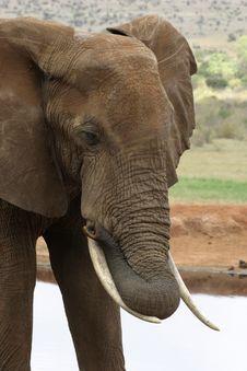 Free African Elephant Stock Photos - 690603