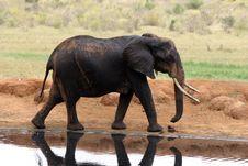 Free Elephant At Waterhole Royalty Free Stock Image - 690606