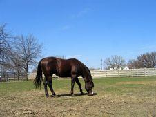 Free Chestnut Stallion Stock Photo - 690760