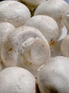 Free Mushrooms Stock Photo - 692110