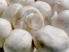 Free Mushrooms Royalty Free Stock Image - 692116