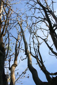 Free Dead Trees In The Sky Stock Photography - 692132