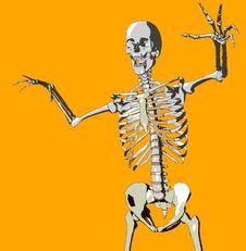 Free Bone 108 Royalty Free Stock Photos - 692678