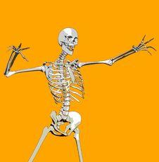 Free Bone 109 Stock Photo - 692680