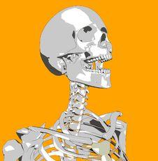 Free Bone 124 Stock Photos - 692683