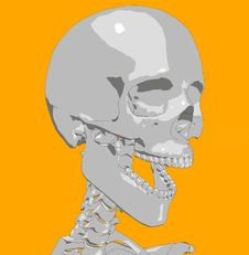 Free Bone 22 Royalty Free Stock Images - 692689