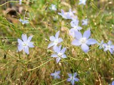 Free Wildflowers Royalty Free Stock Photos - 693158