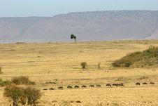 Free Wildebeest Stock Image - 693311
