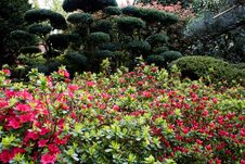 Free Japanese Garden Stock Photography - 693372