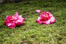 Free Japanese Garden Stock Photo - 693480