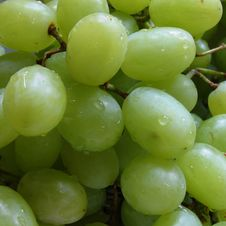 Free Grapes Macro Royalty Free Stock Image - 693986