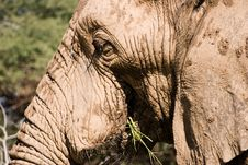 Free Elephant Series 1 Stock Photography - 694062