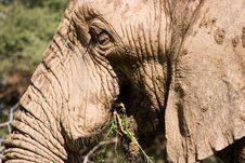 Free Elephant Series 1 Royalty Free Stock Photography - 694067
