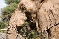 Free Elephant Series 1 Royalty Free Stock Photos - 694068