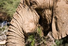 Free Elephant Series 1 Royalty Free Stock Photos - 694088