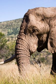 Free Elephant Series 1 Stock Photography - 694092