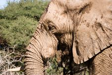 Free Elephant Series 1 Stock Photos - 694093