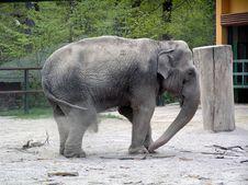 Free Elephant Stock Photo - 694290