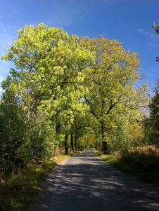 Free Way Among Summer / Autumn Tree Royalty Free Stock Photos - 694478