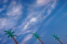 Free Palm Trees Blue Sky Royalty Free Stock Photography - 695507