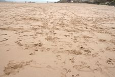 Free Beach Footprints Royalty Free Stock Photos - 695638