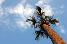 Free Palm Tree Royalty Free Stock Photos - 695928