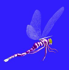 Free Dragonfly 25 Royalty Free Stock Image - 696766