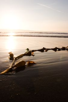 Free Seaweed On Beach Stock Photos - 697313