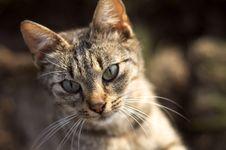 Free Cat Royalty Free Stock Image - 698226