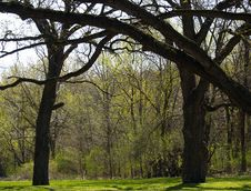 Free Tree Archway Royalty Free Stock Photos - 699178