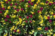 Flowers Burst Stock Image