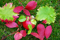 Free Fallen Autumn Leaves Royalty Free Stock Image - 6903346