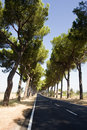 Free The Via Appia In Italy Royalty Free Stock Image - 6905766