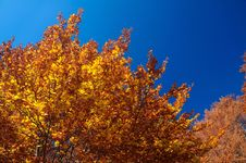 Abruzzo Fall Colors Royalty Free Stock Images