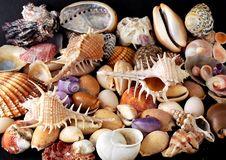 Free Alluvial Of Mediterranean Seashells Stock Images - 6902624