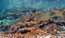 Free Indonesian Coral Reef Stock Photos - 6902793