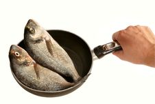 Two Dorada Fishes On Pan (isolated) Royalty Free Stock Image