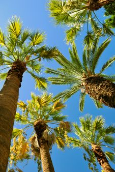 Free Tropical Palms Royalty Free Stock Images - 6902899