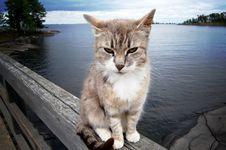Free Pensive Cat Stock Photos - 6903723