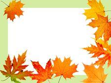Free Autumn Maple-leaf Royalty Free Stock Photo - 6903885