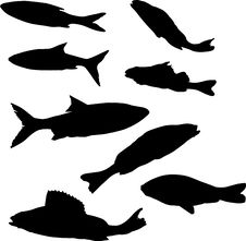 Free Eight Fish Silhouettes Royalty Free Stock Image - 6903946