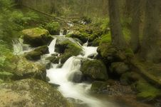 Free The Forest Stream Stock Photos - 6904073