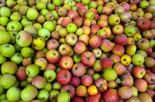 Free Apples Stock Photography - 6904592