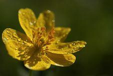 Free Flower Stock Photos - 6904913