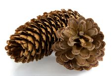 Fir And Pine  Cone Royalty Free Stock Photos