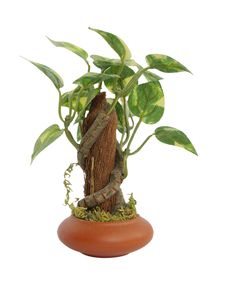Artificial Plant Stock Image