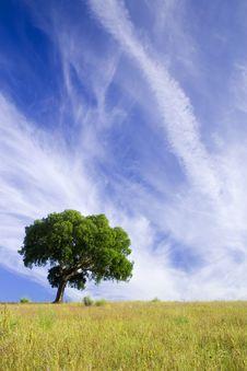 Free Tree In Blue Royalty Free Stock Images - 6906389