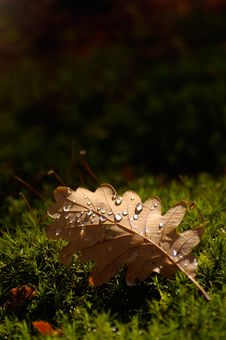 Free Waterdrops On Autumn Leaf Stock Photography - 6906502
